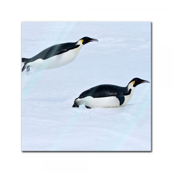 Glasbild - Pinguin II