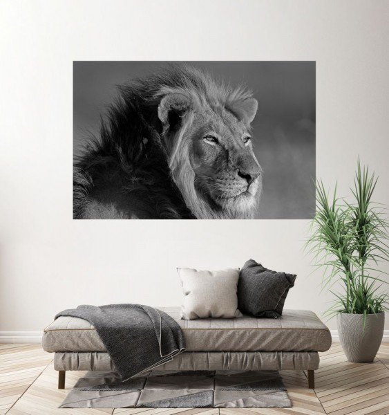SALE Fototapete - Afrikanischer Löwe - schwarz weiß - 150cm x 100cm