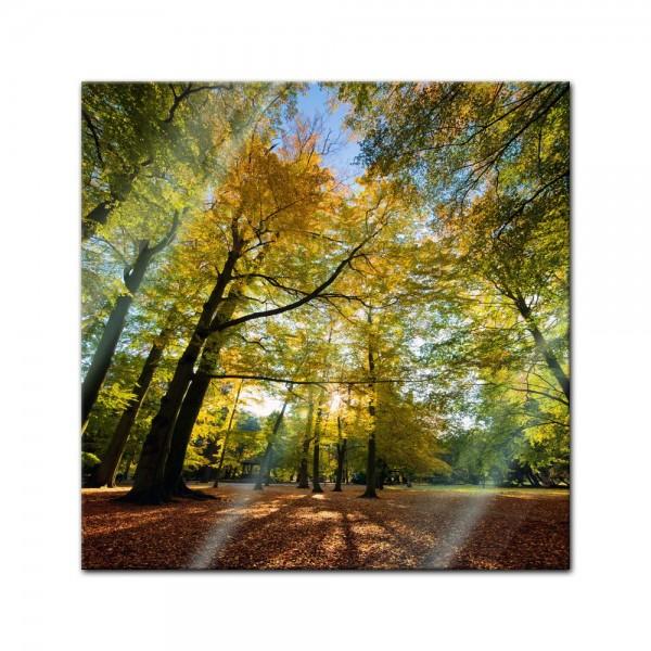 Glasbild - Blätterfall im Herbst
