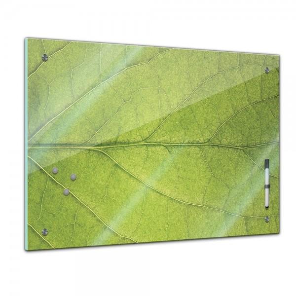 Memoboard - Pflanzen & Blumen - Blatt