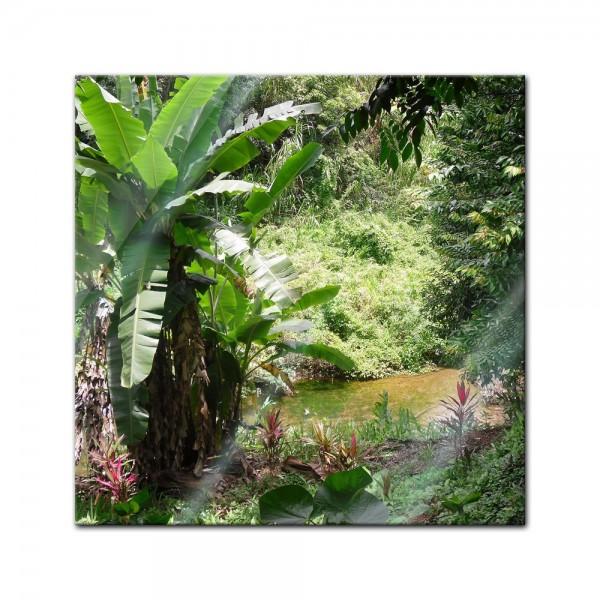 Glasbild - Bananenbaum im Dschungel