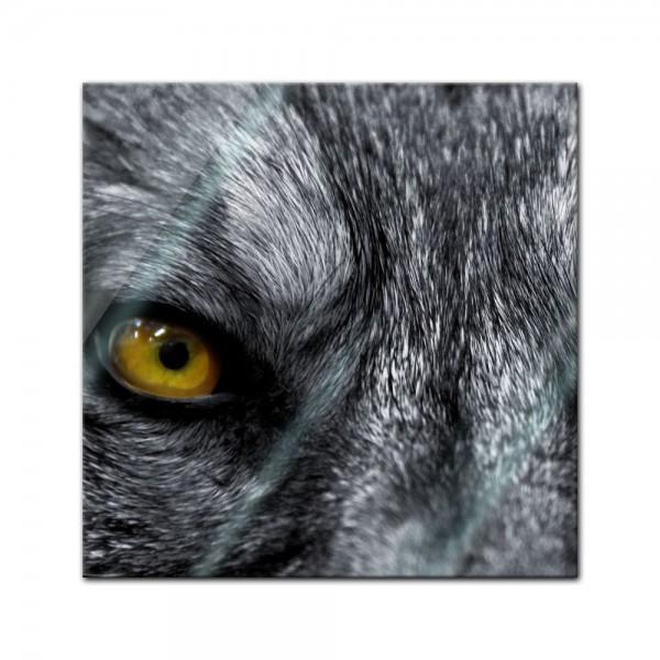 Glasbild - Wolfsaugen