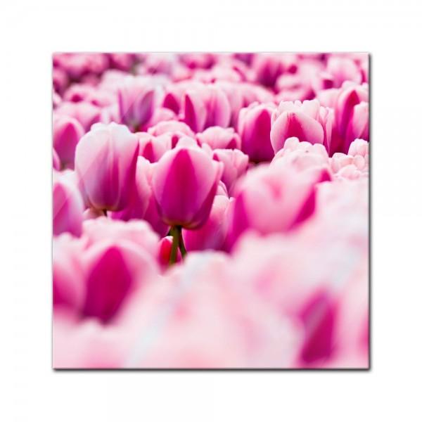 Glasbild - Pinke Tulpen