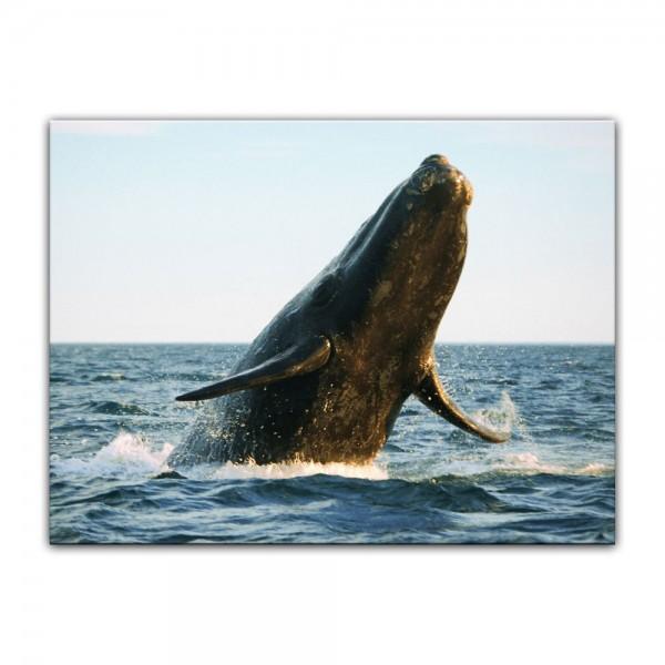 Leinwandbild - Wal