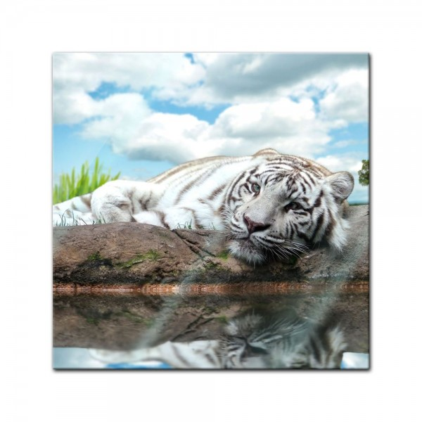 Glasbild - White Tiger