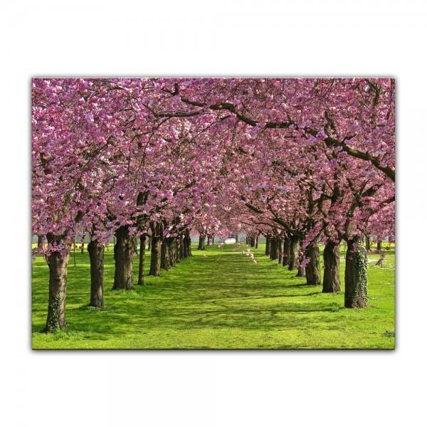 Leinwandbild - Kirschblüten