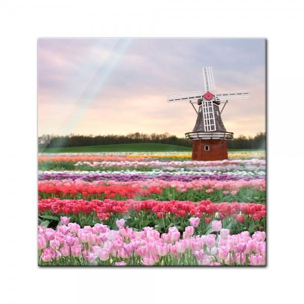 Glasbild - Tulpenfeld mit Windmühle