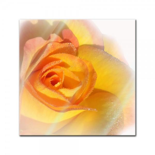 Glasbild - Gelbe Rose