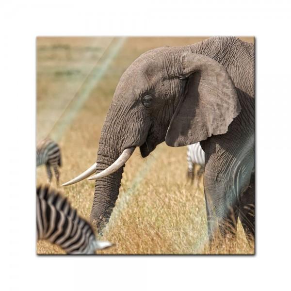 Glasbild - Afrika ( Zebra und Elefant)