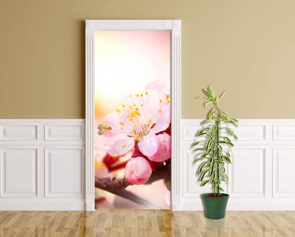 Türaufkleber - Aprikosenblüten - Aprikose