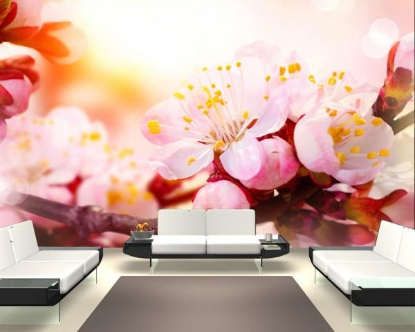 SALE Fototapete - Aprikosenblüten - 155 cm x 100 cm - farbig