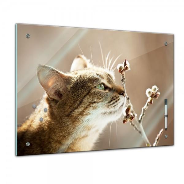 Memoboard - Tiere - schnuppernde Katze