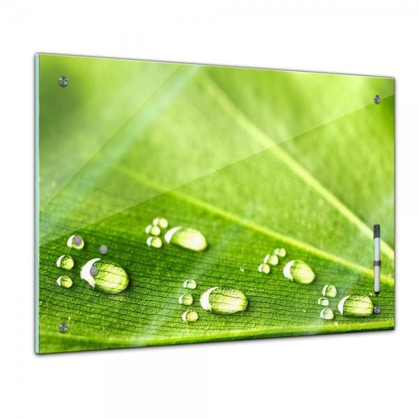 Memoboard - Pflanzen & Blumen - Blatt und Wasser