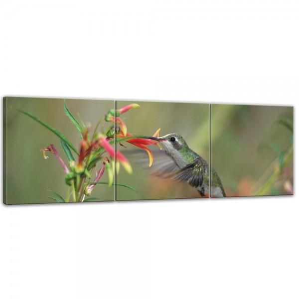SALE Leinwandbild - Kolibri im Flug - 180x60 cm 3tlg