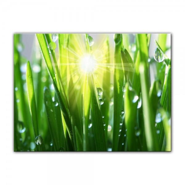 Leinwandbild - Gras II