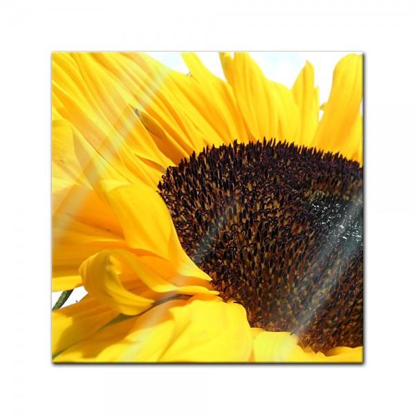Glasbild - Sonnenblume