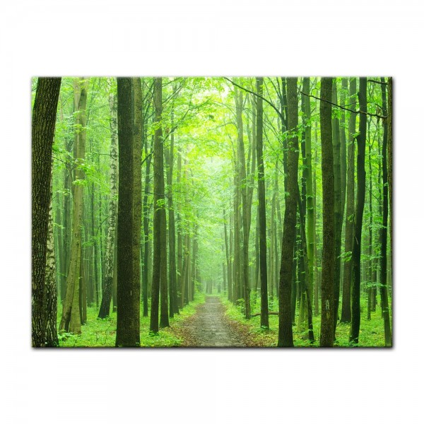 Leinwandbild - Waldweg