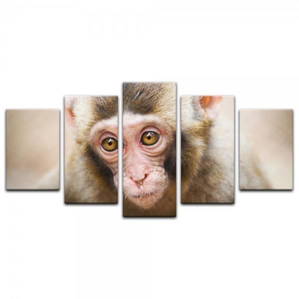 Leinwandbild - Affengesicht
