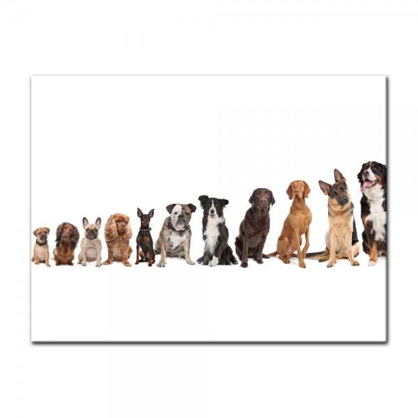 Leinwandbild - Hundebande