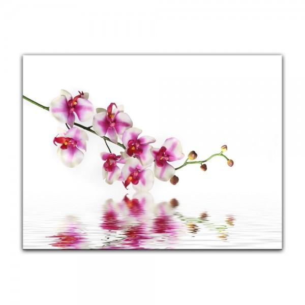 Leinwandbild - Orchideenzweig