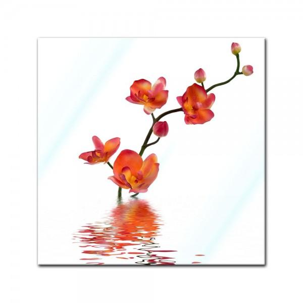 Glasbild - Orchidee im Wasser