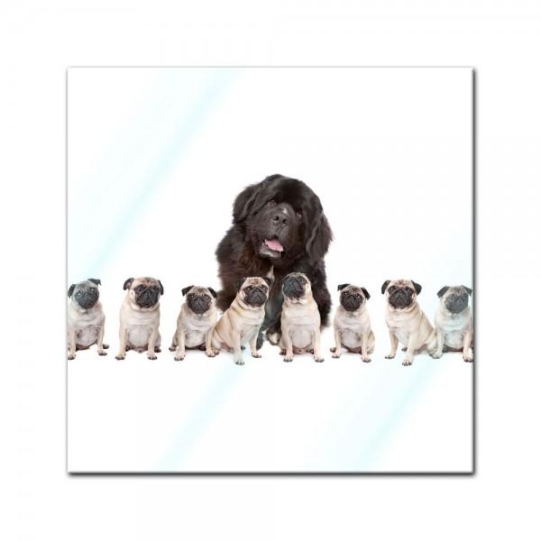 Glasbild - Grosser Hund mit kleinen Hunden