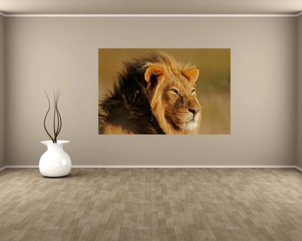 Fototapete - Afrikanischer Löwe