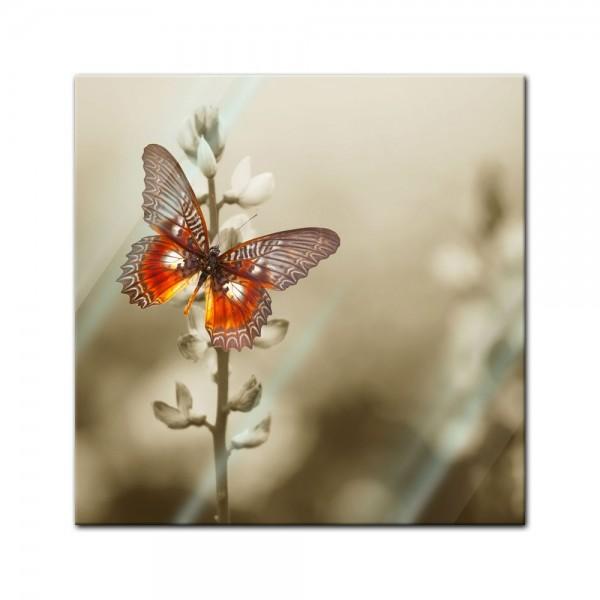 Glasbild - Roter Schmetterling auf einem Feld