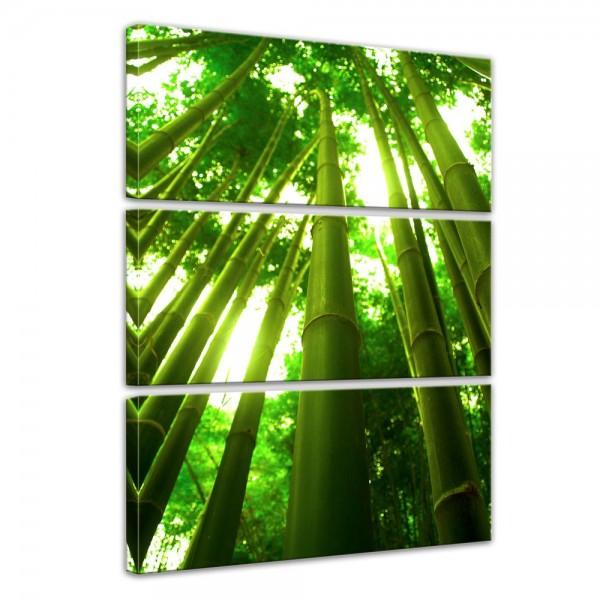 SALE Leinwandbild - Bambus in Thailand - 60x90 cm 3tlg