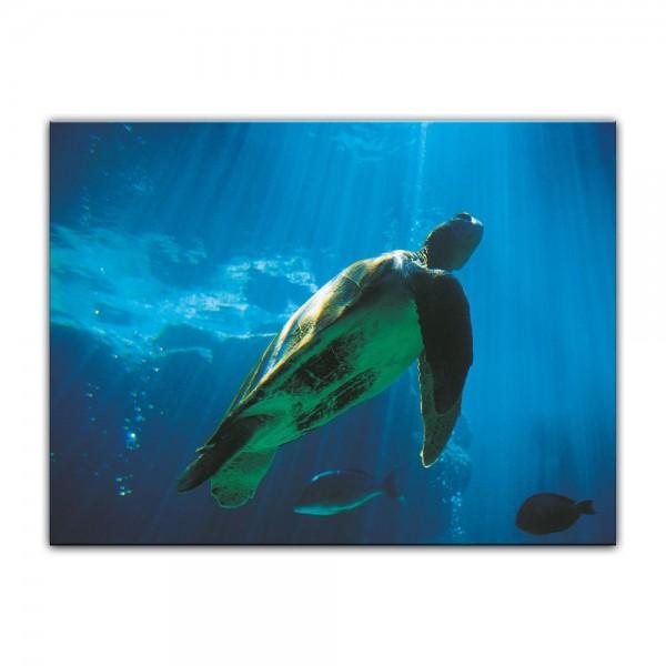 Leinwandbild - Schildkröte