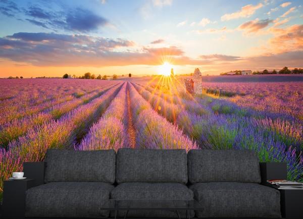 Fototapete - Lavendelfeld in Südfrankreich