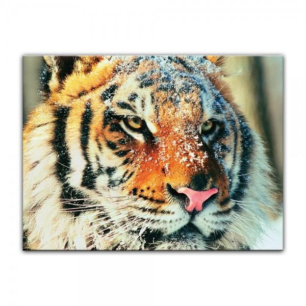 Leinwandbild - Tiger im Schnee II