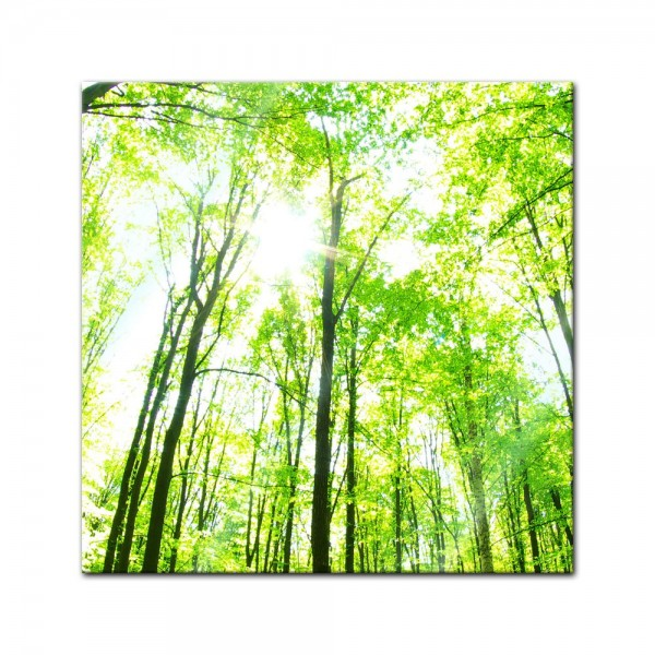 Glasbild - Grüner Wald