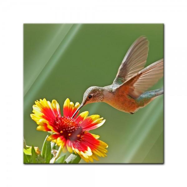 Glasbild - Kolibri