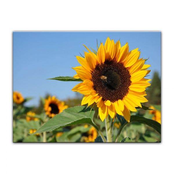 Leinwandbild - Sonnenblume mit Biene