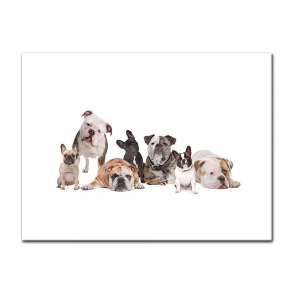 Leinwandbild - Bulldoggenfamilie